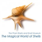 The Magical World of Shells